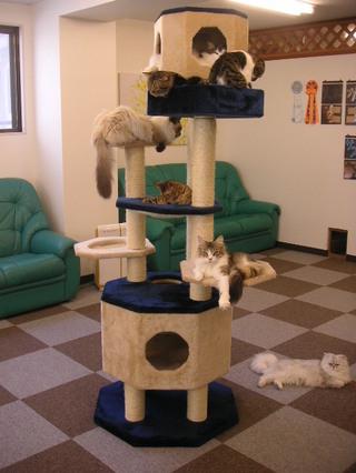Cat_cafe_nyanny