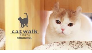 Catwalk_01